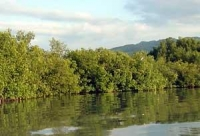 Beautiful mangroves along the water's edge