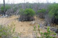 Beautiful Cozumel Mangroves!
