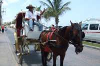Enjoy a Carriage Ride Tour Through the City!