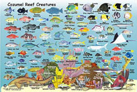 Reef Map - Side 2