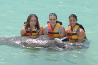 Dolphin Discovery Manatees Reserve online here!