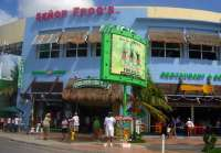 Senor Frog's Cozumel - Where Anything Can Happen!