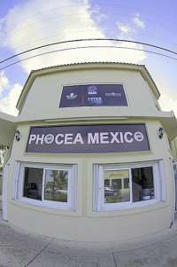 Welcome to Phocea Mexico Cozumel