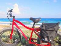 Pedago Electric Bikes Are Green-Friendly