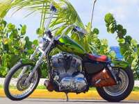 Rev Your Engine on a Harley in Cozumel