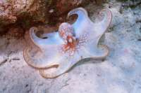 Calamari Anyone - JUST KIDDING!!!