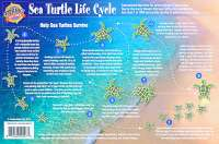 Sea Turtle Life Cycle Card - Front Side