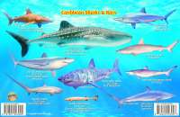 Check out some of our Caribbean Sharks & Rays